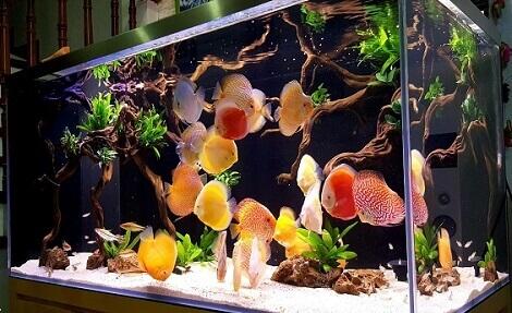 بیماری های مشترک بین انسان و ماهی های آکواریومی