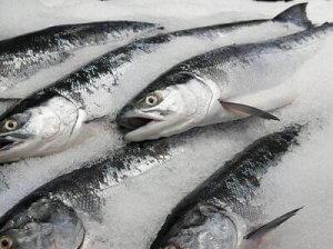 نگه داری ماهی در فریزر