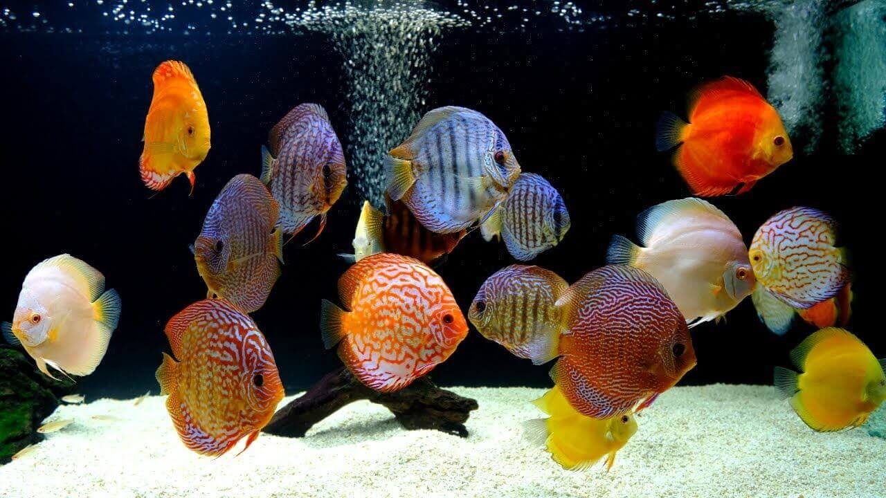 پرطرفدارترین ماهی های آکواریومی