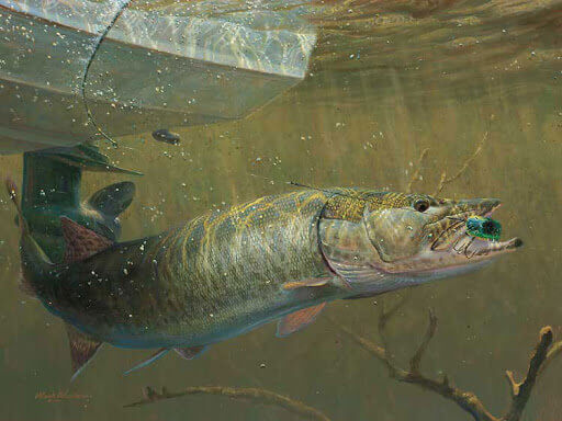 ماهی کپور سر قلاب