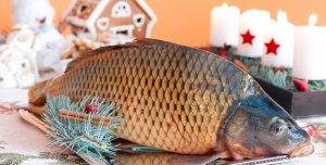 خیرد بچه ماهی کپور