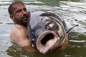 خرید بچه ماهی کپو